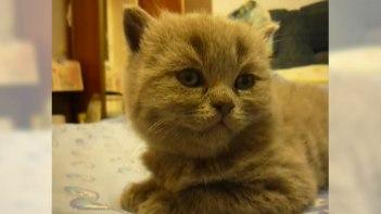 16秒の健闘むなしく突然睡魔に負けてしまう可愛いネコさん