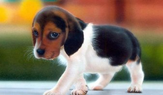 Photos-of-cute-puppies-016