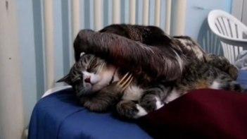 ネコさんが大好きなナマケモノ。ナデナデしたり抱きしめたり