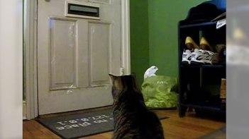 郵便屋さんを玄関のドアの前で心待ちにしているネコさん