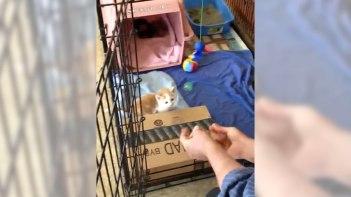 ケージの中にいる子ネコさんにおいでおいでしてみたら♥