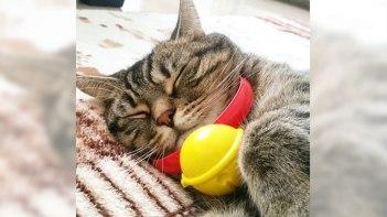 マクドナルドのハッピーセットがなぜかネコを飼っている人に大人気!その理由がこちら!