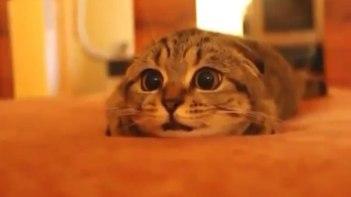 「はわわわ」ホラービデオを見ているネコがとっても抱きしめたくなる