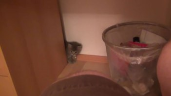 何この子!とっても可愛い!!生まれて7週間の子ネコさん机の裏から出たり入ったり!