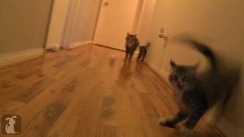 ボールで遊んでいる子ネコさんたち 突然のクシャミにビックリ!