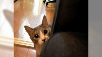 「だるまさんが転んにゃ♪」飼い主さんの元までそーっと忍び寄るネコさん!最後には画面越しに思わず抱きつきたくなっちゃいます♪