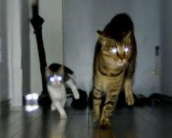 2匹のネコさんタッグが贈るふしぎと元気の出るエンターテイメント!