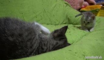 「ず~と見ていたくなる♪」縦横無尽に駆け巡っている元気すぎる子ネコさんたちをついつい目で追ってしまう!