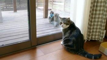お外にお猿さん来てる・・・我らがまるちゃんお猿さんと出会う!