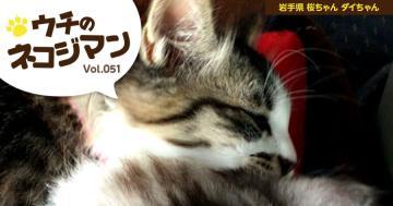 岩手県 桜ちゃんとダイちゃん