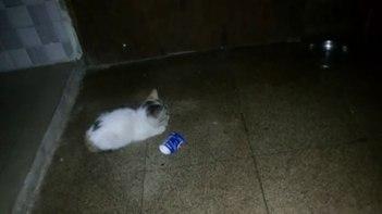 うわっ!!ビックリ!箱座りしている子ネコさんを撮影していたら・・・