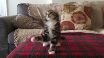 キャワワ♥音楽のリズムに合わせてノリノリで踊る子ネコさん