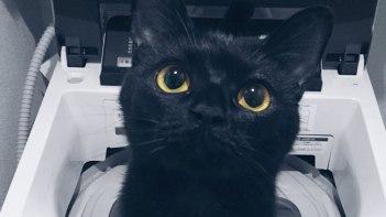 洗濯機からの使者!?澄んだおめめがとってもカワイイ黒ネコさん