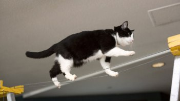 ネコさんのとってもバランス感覚が分かる写真10選+2枚