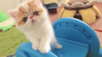 ただ遊んでいるだけ・・・子ネコさんたちが滑り台で遊ぶ姿にキュンキュンする!