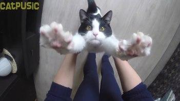 抱っこ大好き♥-飼い主さんに抱っこしてもらうためにバンザイしちゃうネコさん