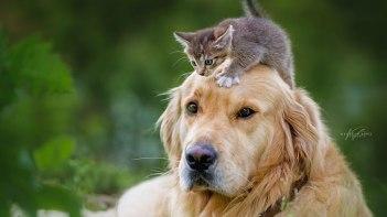 ネコさんと仲良し!ワンちゃんとの素敵かわいい犬猫友情写真!