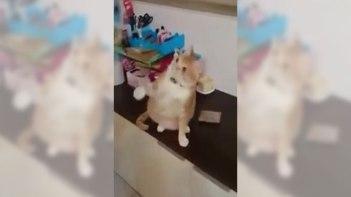 「え・・・??」ネコさんに手品を見せてみたらこんな結果に!