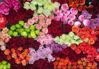 Roses-Farm-4