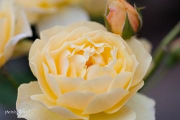 akiko_rose-68