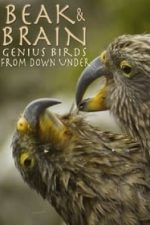 Nonton Film Beak & Brain – Genius Birds from Down Under (2013) Subtitle Indonesia Streaming Movie Download