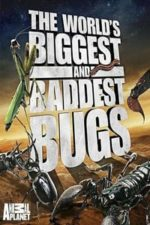 Nonton Film World's Biggest and Baddest Bugs (2009) Subtitle Indonesia Streaming Movie Download