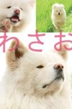 Nonton Film Wasao (2011) Subtitle Indonesia Streaming Movie Download