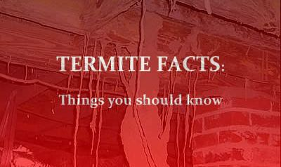 Termite Facts: Things you should know