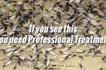 Natural Termite Remedies -Getting rid of Termites