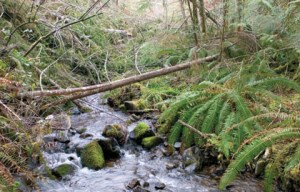 This stream high in the Hinkle Creek watershed of the Oregon Cascades has provided scientists with data on forest harvesting and water quality. (Photo: Kelly James)