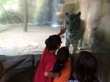 His #1 request to see - a tiger!