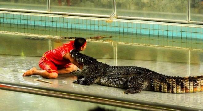 Крокодиловое шоу в Паттайе