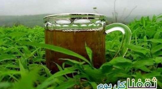 كنوز شاي الزعتر الطبيعية %D8%B4%D8%A7%D9%8A-%D8%A7%D9%84%D8%B2%D8%B9%D8%AA%D8%B1