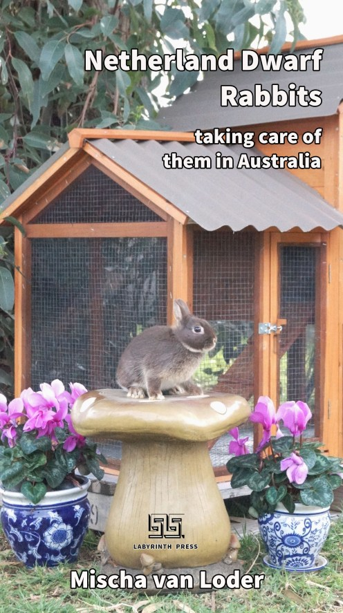 Netherland Dwarf Rabbits: taking care of them in Australia