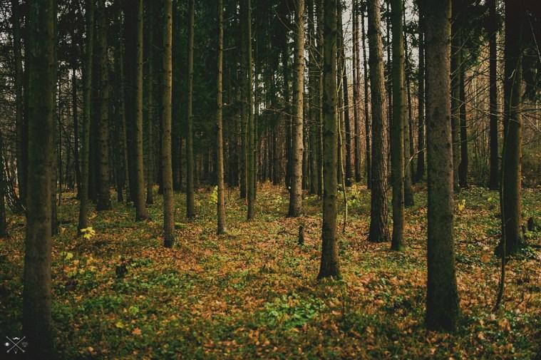 Осенний лес Дмитрия Адаменко