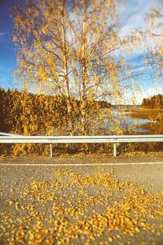 Золотая осень: Финляндия Марии Гринчук