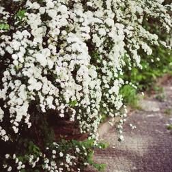 Европейская весна: путешествие в цветущий майский Берлин