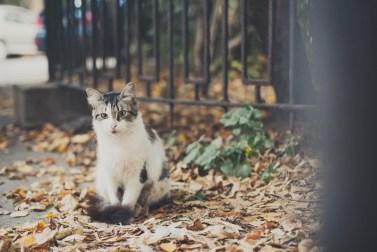 Sami po sebe peterburgskie koty (10)