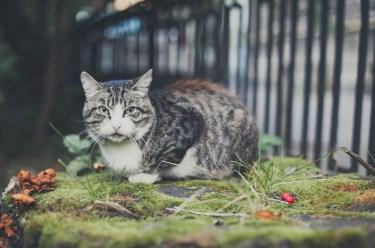 Sami po sebe peterburgskie koty (13)