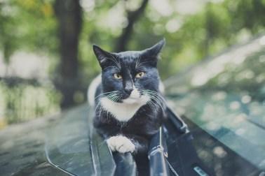 Sami po sebe peterburgskie koty (5)