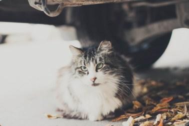 Sami po sebe peterburgskie koty (6)
