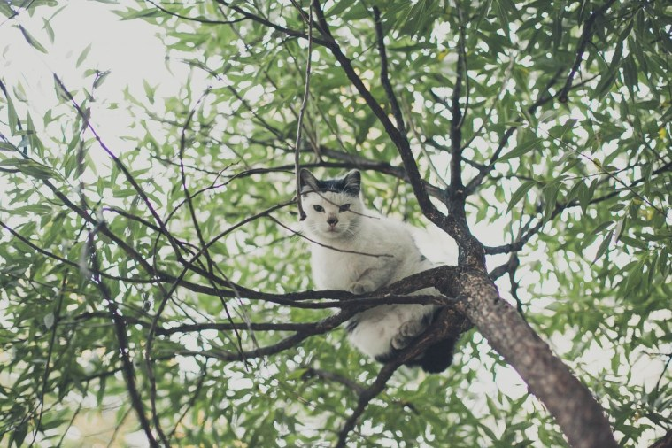 Sami po sebe peterburgskie koty (9)