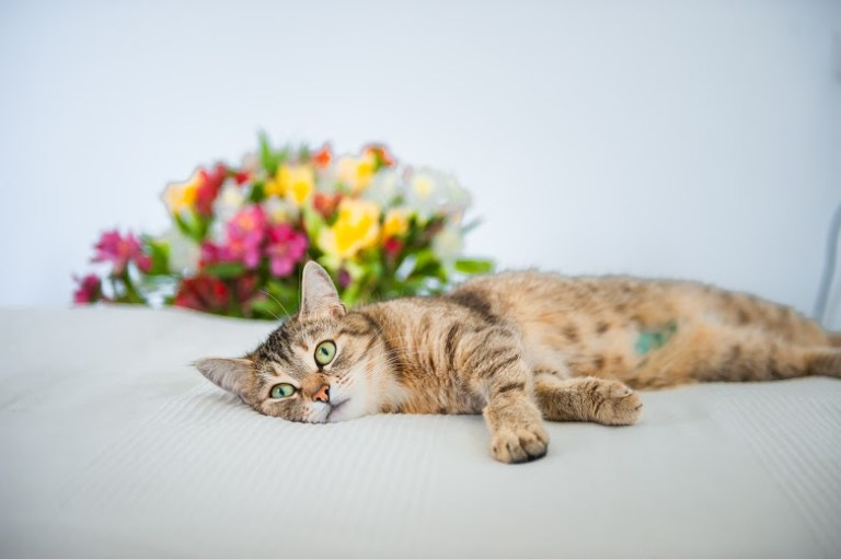Кошка Мася: без породы, из приюта, и самая любимая!