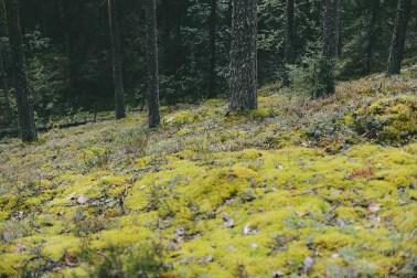 Дом на берегу озера: путешествие в Финляндию