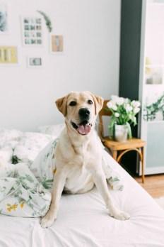 Labrador-Miha-1 (3)