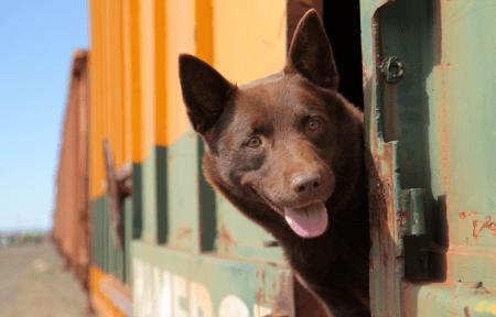 Подборка фильмов про животных: часть 1