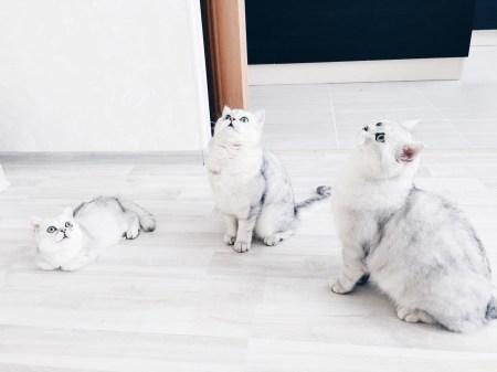 Пушистое счастье: Балу, Элли и маленький Барни