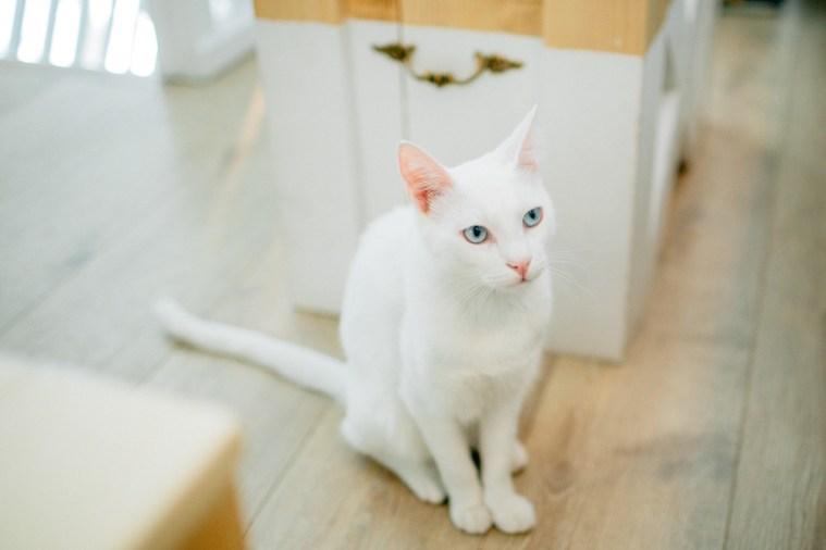 Romeow Cat Bistrot-2 (4)