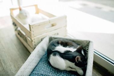 Romeow Cat Bistrot-2 (8)