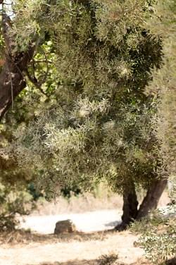 Радушие и уют: путешествие на Кипр